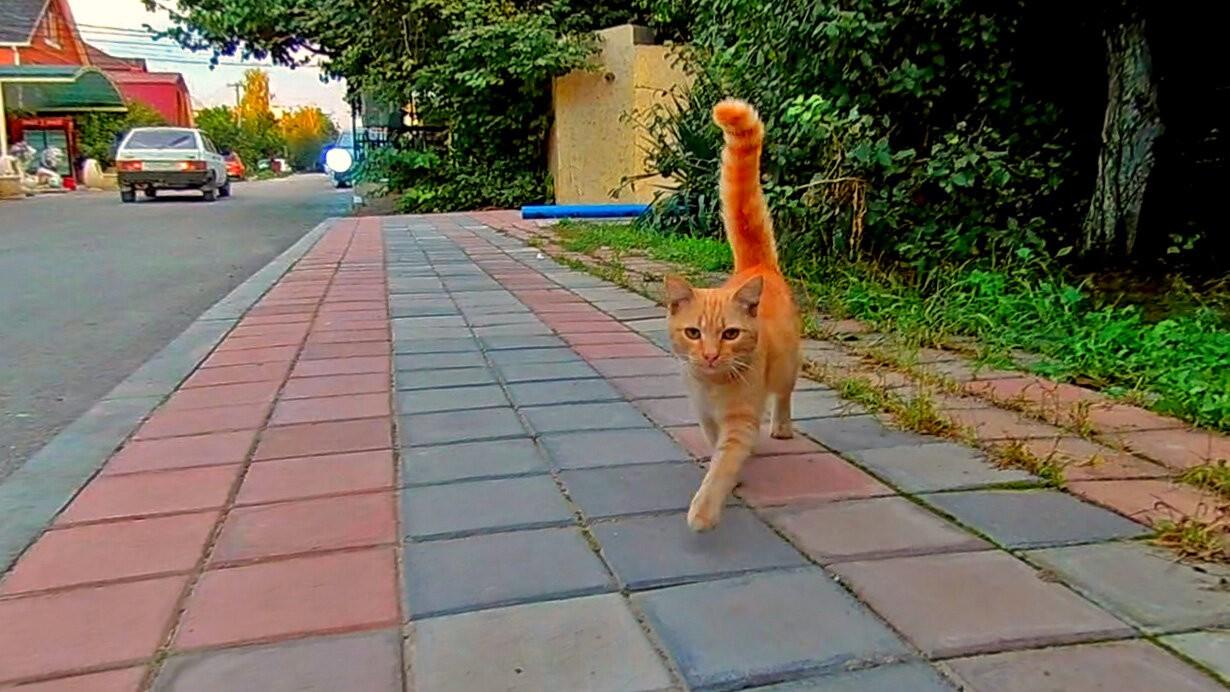 Анапа - город котиков отзывы котики истории из жизни Анапа