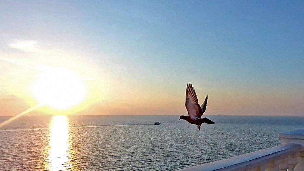 5 причин захотеть переехать жить в Анапу полезные советы отзывы отдых и развлечения Море Анапа