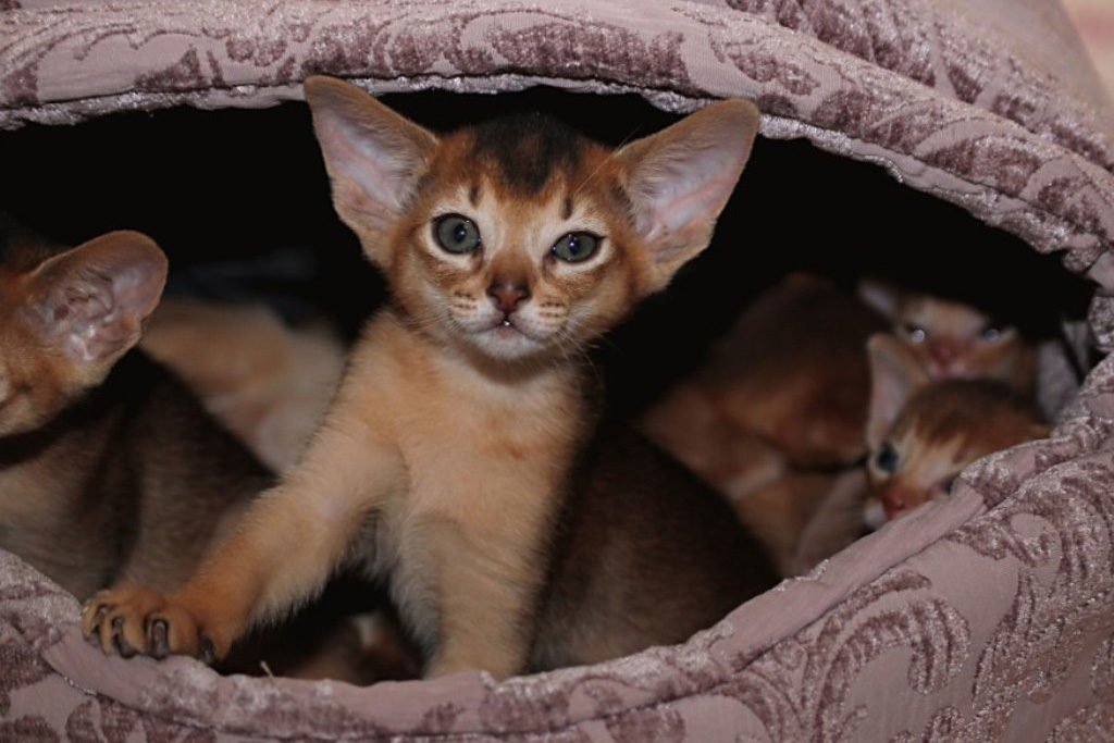 История про кота, смешного и самого голодного в мире смешные котики котики истории из жизни