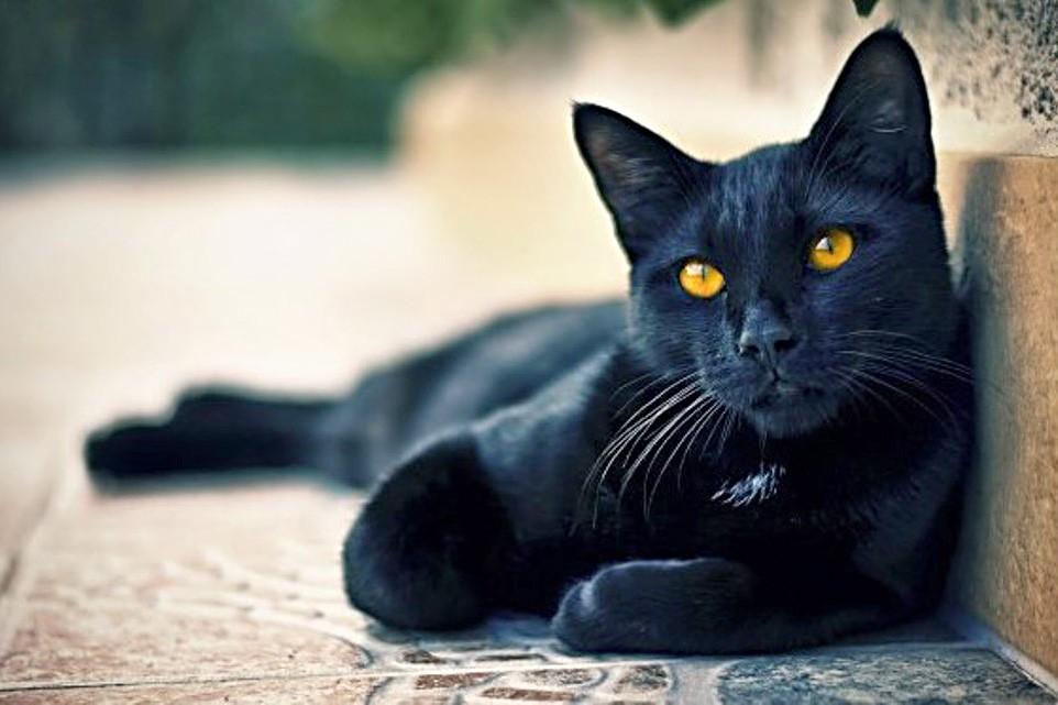 История, как деревенский кот усыновлял городских котят смешные котики котики история из жизни