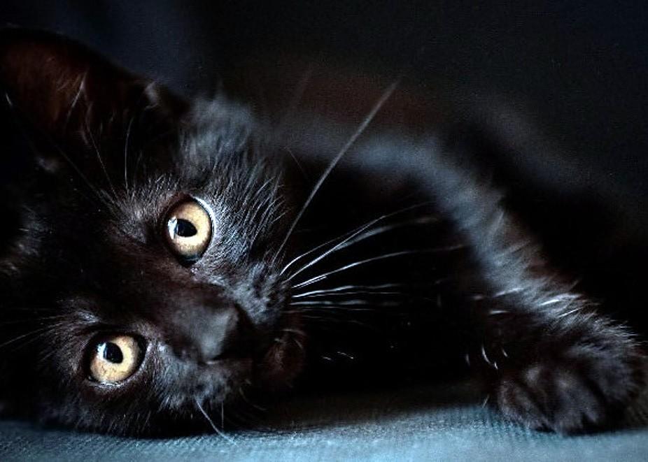 Влияет ли окрас кошки на судьбу владельца? топ и подборки полезные советы котики истории из жизни