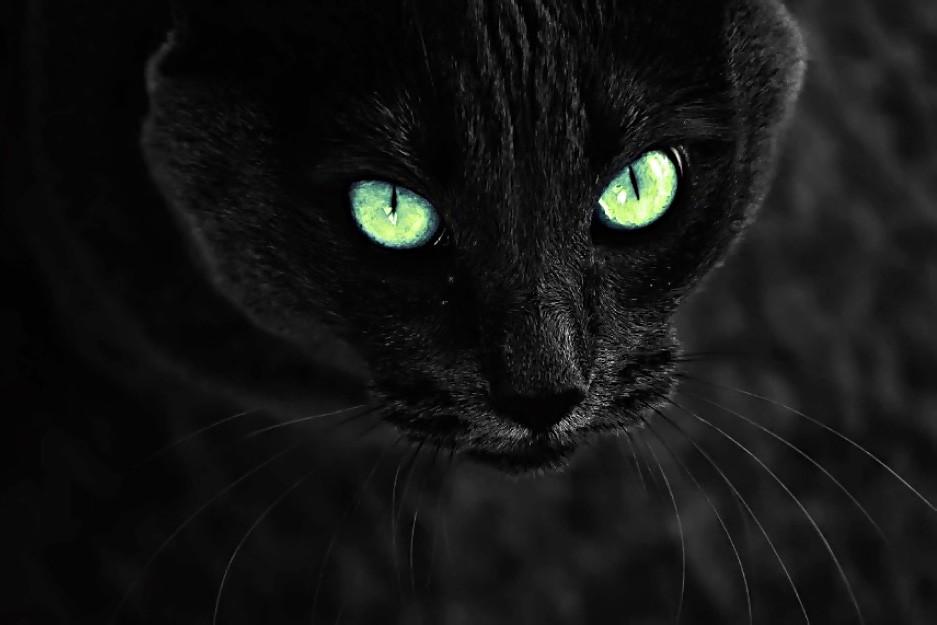 Черный котенок. Рассказ. Питомцы Рассказы  котики истории из жизни