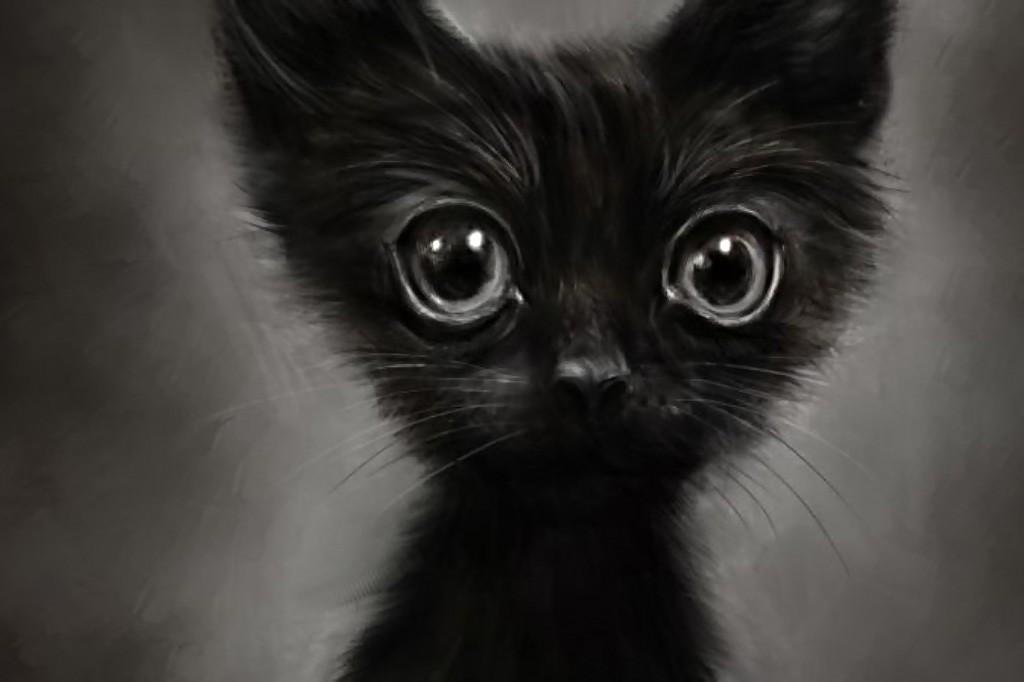 Черный котенок. Рассказ. котики истории из жизни
