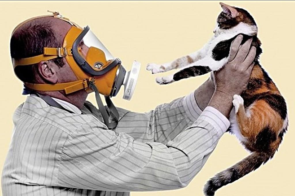 Гипоаллергенные породы кошек топ и подборки полезные советы котики истории из жизни здоровье