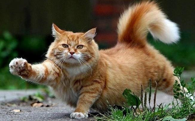 Нужно ли выгуливать домашних кошек? полезные советы котики