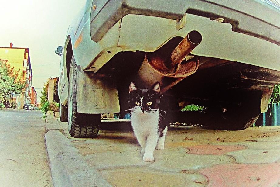 Кошки на улице. Тяжело ли им жить. котики истории из жизни