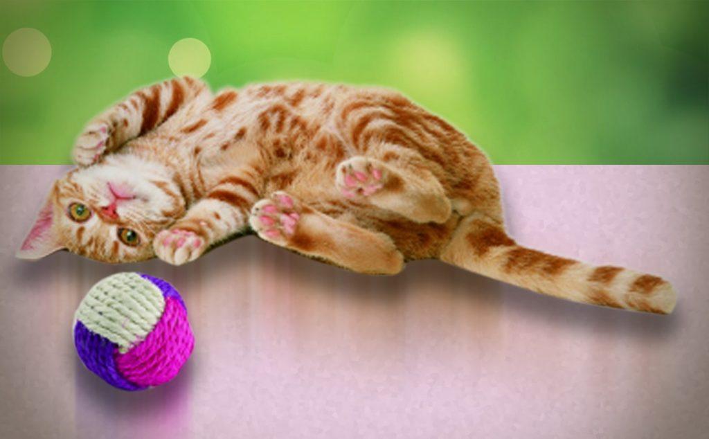 Игрушки для котиков из Fix Price Лайфхаки Питомцы  экономия денег полезные советы покупки личный опыт котики игрушки дешевые товары Fix price