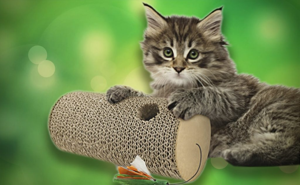 Игрушки для котиков из Fix Price экономия денег полезные советы покупки отзывы котики игрушки дешевые товары Fix price