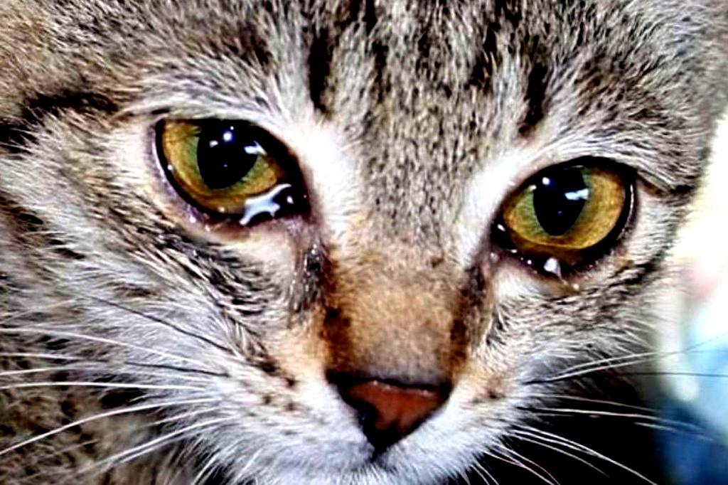 Есть ли в России уголовная ответственность за жестокое обращение с животными? котики истории из жизни