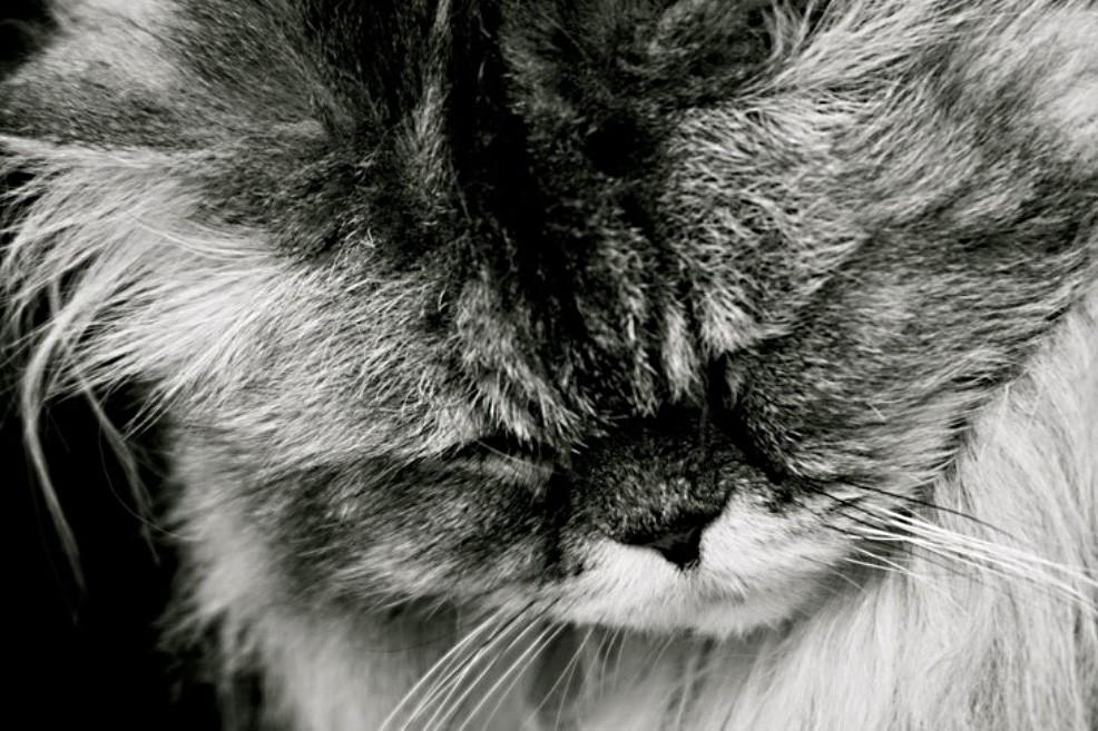 Есть ли в России уголовная ответственность за жестокое обращение с животными? Питомцы  котики истории из жизни