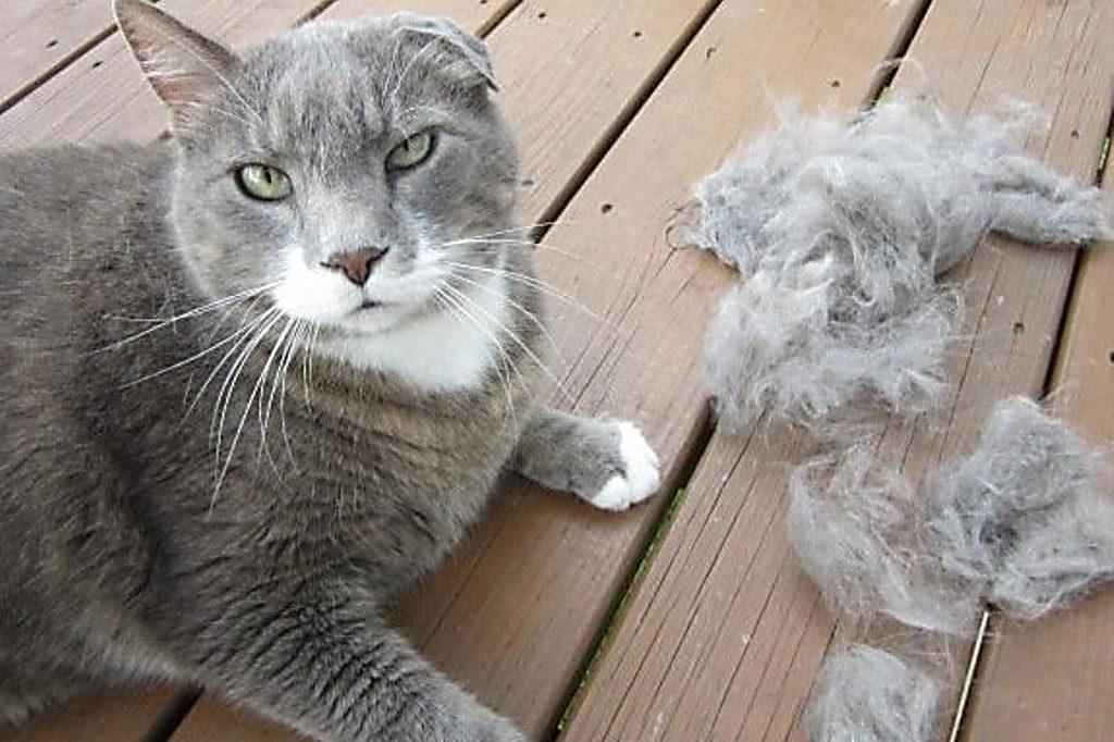 Приметы с кошками актуальные на сегодня топ и подборки полезные советы котики истории из жизни