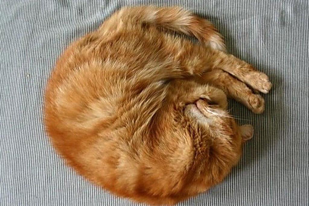 Приметы с кошками актуальные на сегодня Питомцы  топ и подборки полезные советы котики истории из жизни