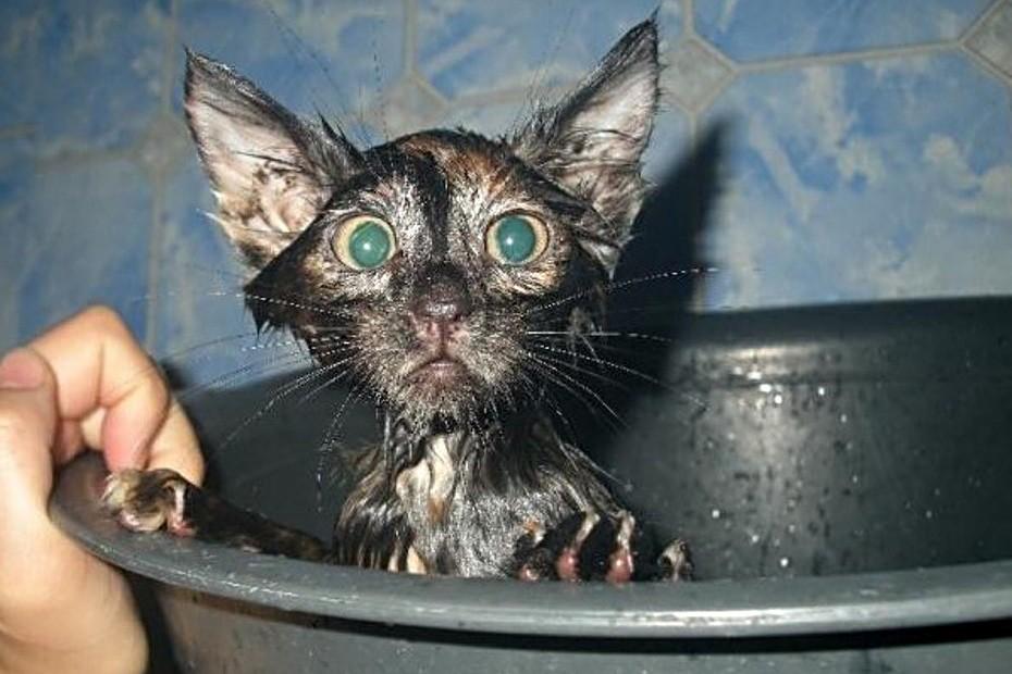 История про котика. Кот-ихтиандр. смешные котики котики история из жизни