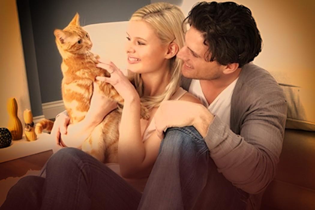 История про кота, измену и прощение котики история из жизни