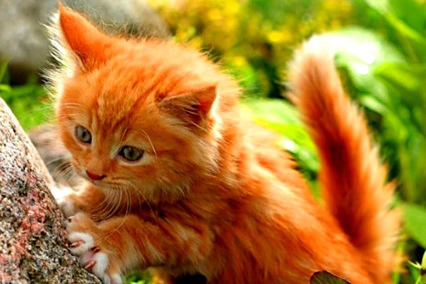 Купить котенка породистого или взять с улицы? смешные котики полезные советы котики история из жизни