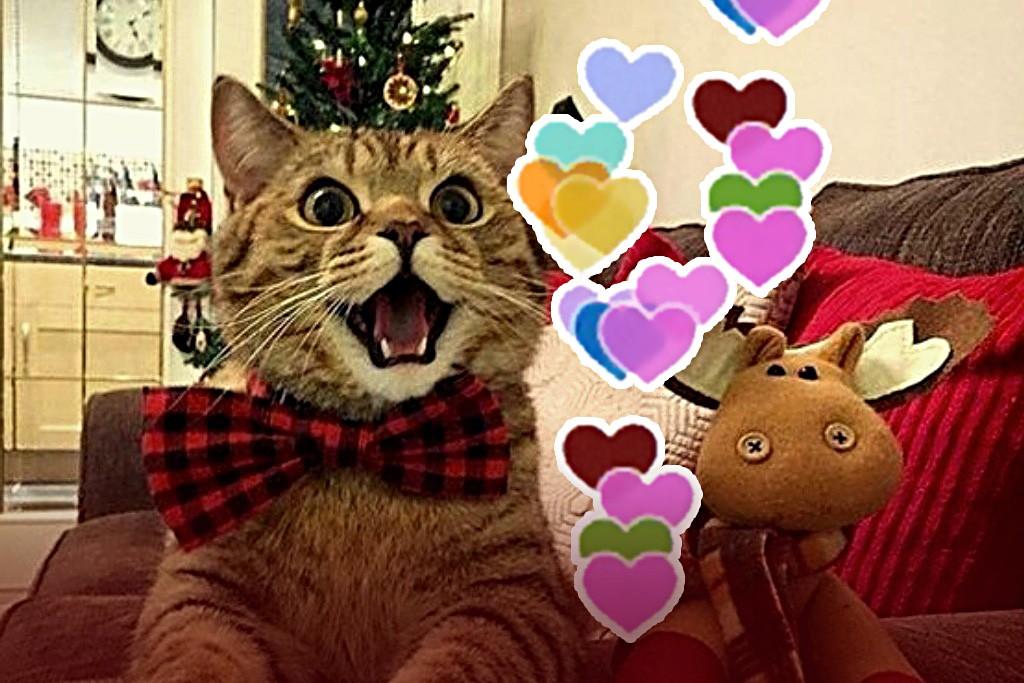 Какие признаки, что котик любит вас? смешные котики полезные советы котики