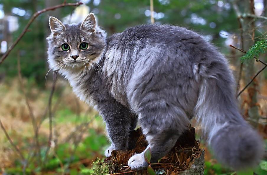 История из жизни. Кошка спасла жизнь ребенку. котики история из жизни