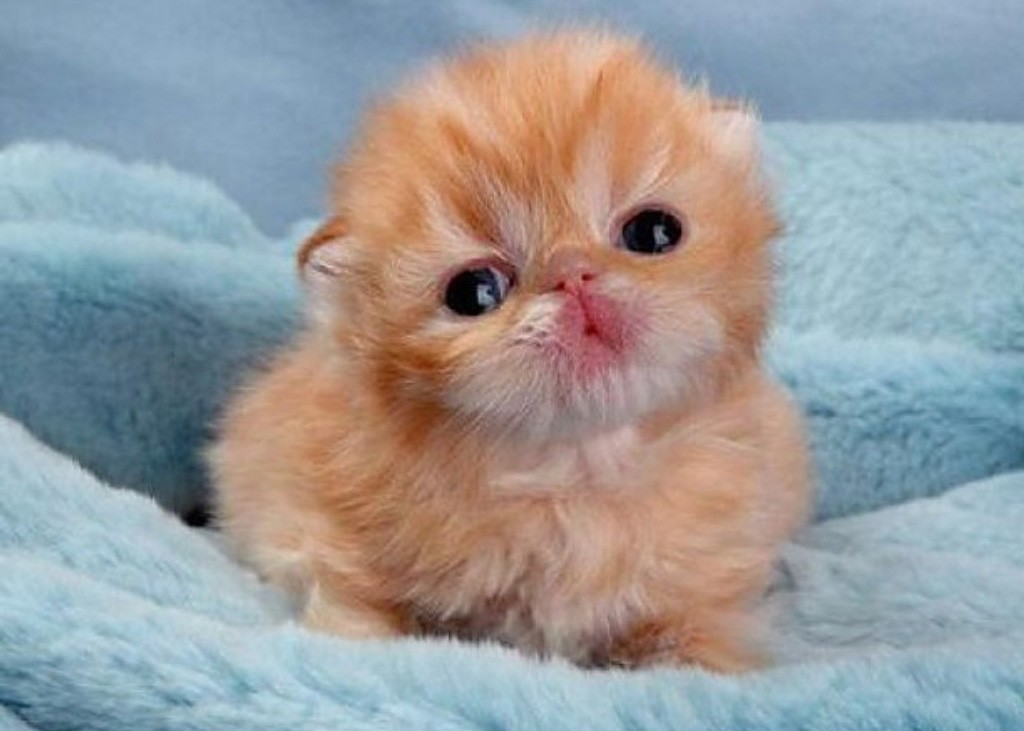 Смешные породы кошек топ и подборки смешные котики полезные советы котики