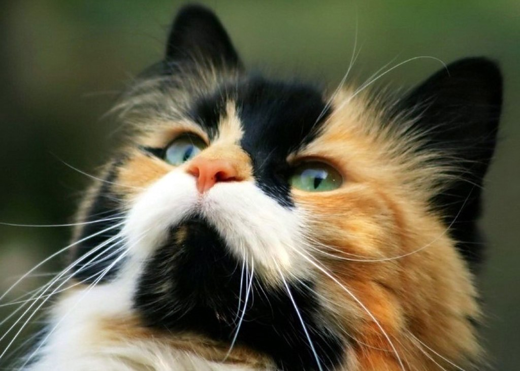 русских кошки подборка картинки влюбились