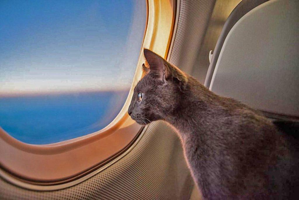 Кот в самолете и в машине. Рекомендации по перевозке животных. Питомцы  путешествие полезные советы котики